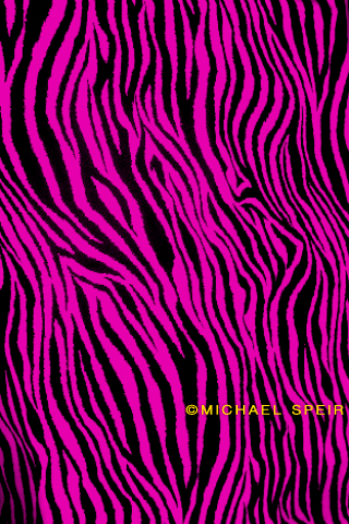 zebra wallpaper. 12-Zebra-Wallpaper-Fuchsia